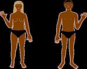 299x237 Human Body B Clip Art