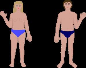 299x237 Human Body Boy Amp Girl Clip Art