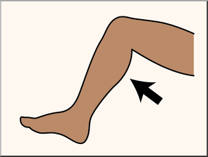 304x229 Clip Art Parts Of The Body Calf Color Unlabeled I