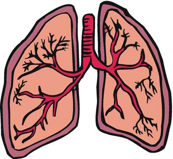 350x322 Respiratory System Facts