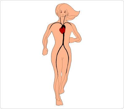 human body clipart free at getdrawings com free for personal use rh getdrawings com clip art human body parts clip art human body parts