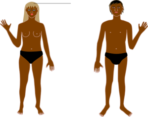 299x237 Photos Human Body Clipart Images,