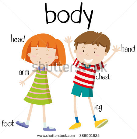 450x457 Gallery Body Parts Clip Art For Kids,