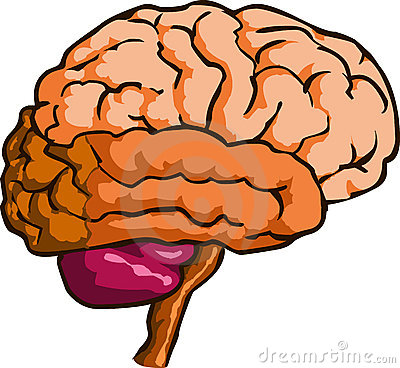 400x368 Collection Of Brain Organ Clipart High Quality, Free