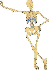 210x299 Human Skeleton Outline Clip Art