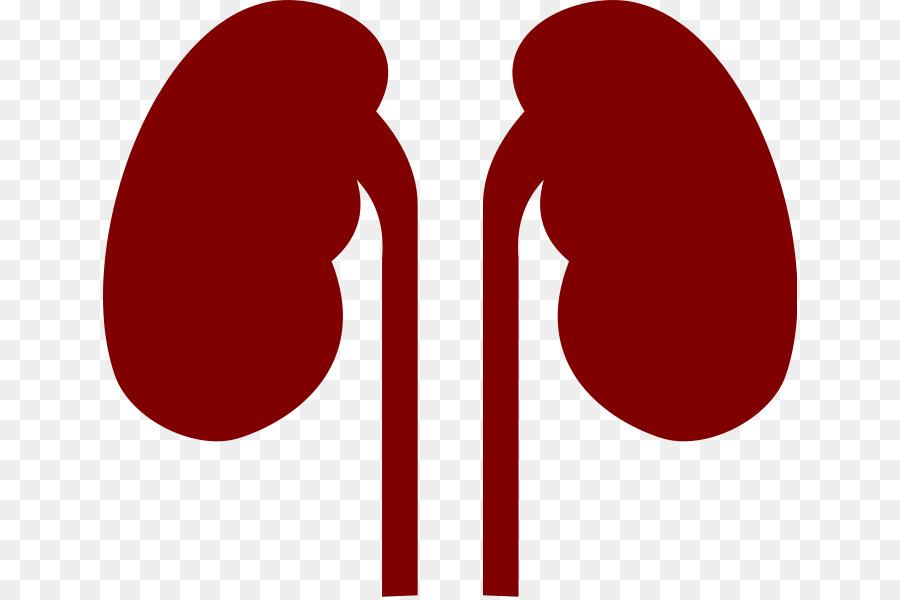 900x600 Kidney Human Body Organ Clip Art