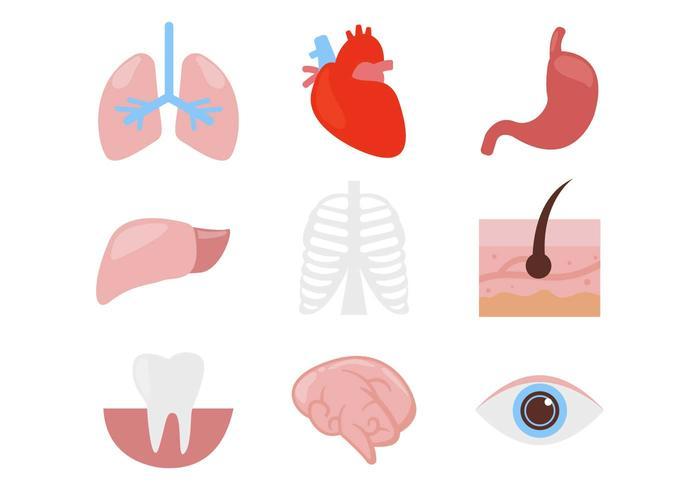 700x490 Human Organ Body Parts Icons Vector