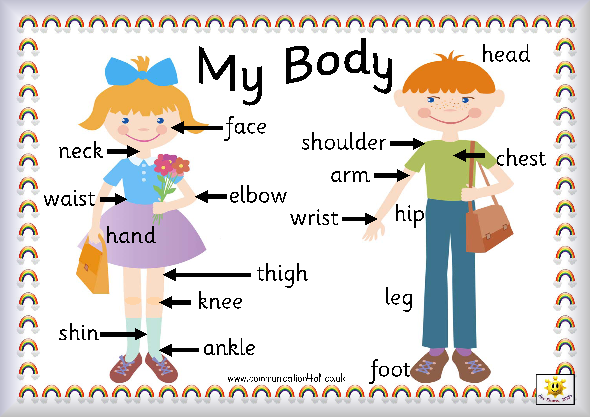 590x417 My Body Partsufeff Can You Name The Parts Of Their Bodyufeff This Is My