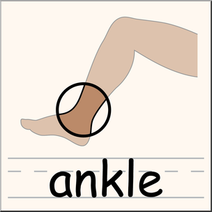 304x304 Clip Art Parts Of The Body Ankle Color I Abcteach