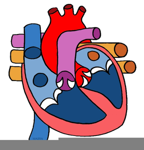 289x300 Human Circulatory System Clipart Free Images