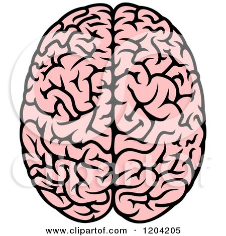 450x470 Clipart Of A Pink Human Brain 3