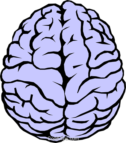 421x480 The Human Brain Royalty Free Vector Clip Art Illustration