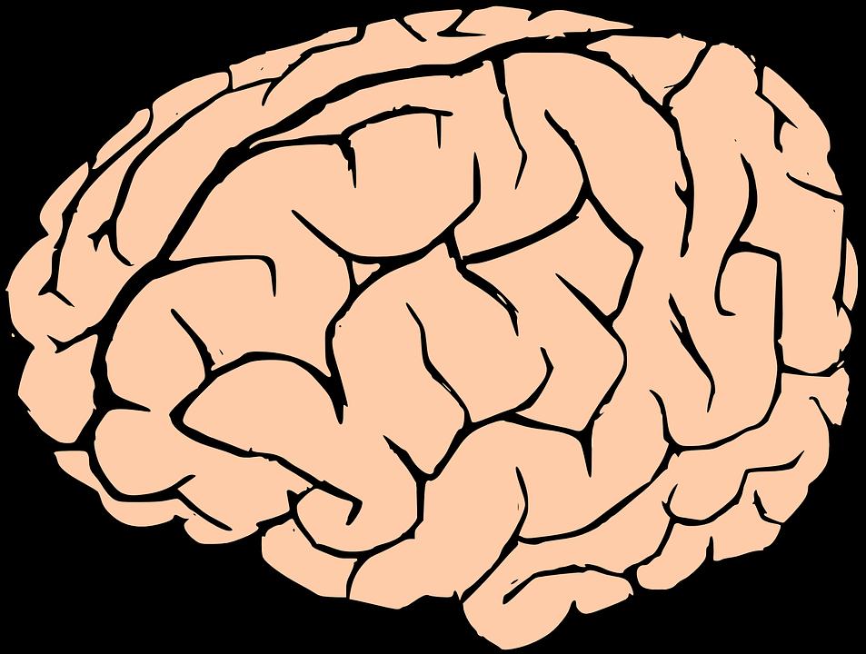 953x720 Human Brain Clipart Brain Human Knowledge Free Vector Graphic