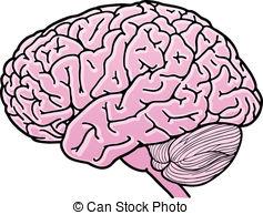237x194 Brain Tissue Vector Clip Art Royalty Free. 259 Brain Tissue
