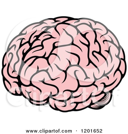 450x470 Clipart Of A Pink Human Brain