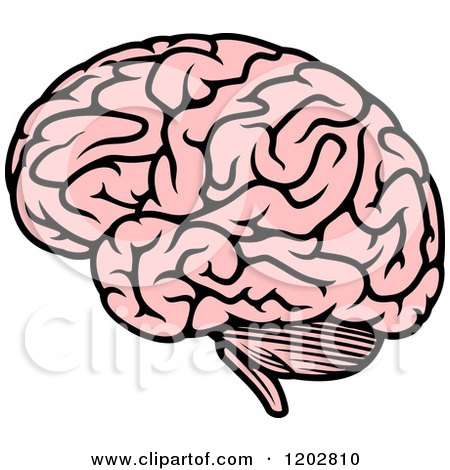 450x470 Clipart Of A Pink Human Brain 2