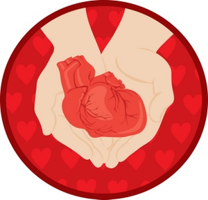 300x289 Free Human Heart Clipart Image 0071 0908 2710 3737 Acclaim Clipart