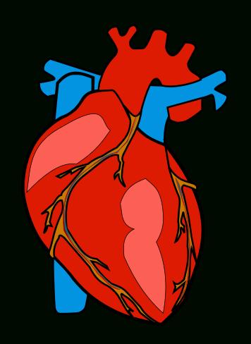 356x488 Marvellous Design Human Heart Clipart Stock Vector Art More Images