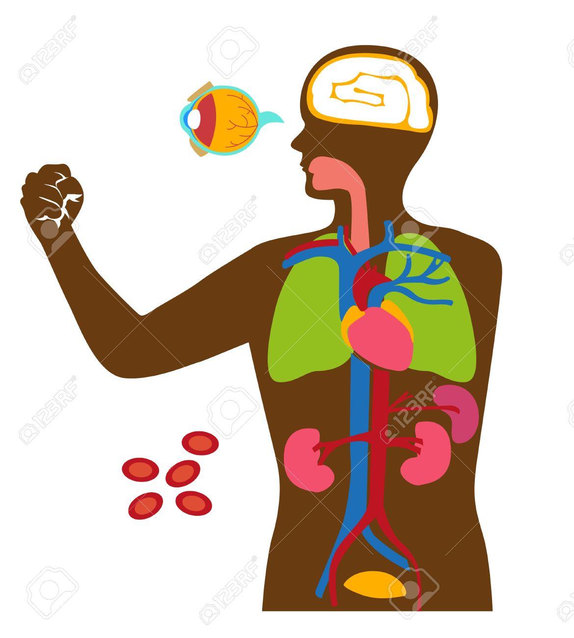 human organs clipart at getdrawings com free for personal use rh getdrawings com human eye clipart human clipart