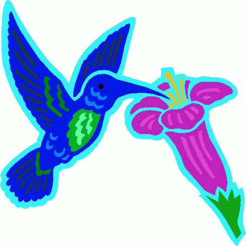 Hummingbird And Flower Clipart