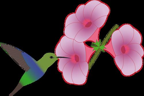 500x332 Colibri Bird Picking On A Flower Illustration Public Domain Vectors