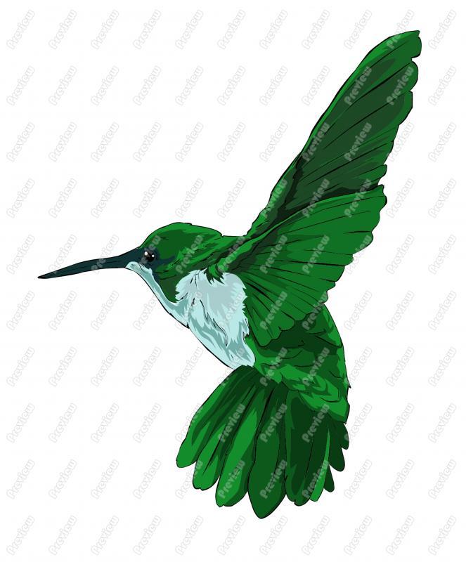 663x800 Hummingbird Character Clip Art