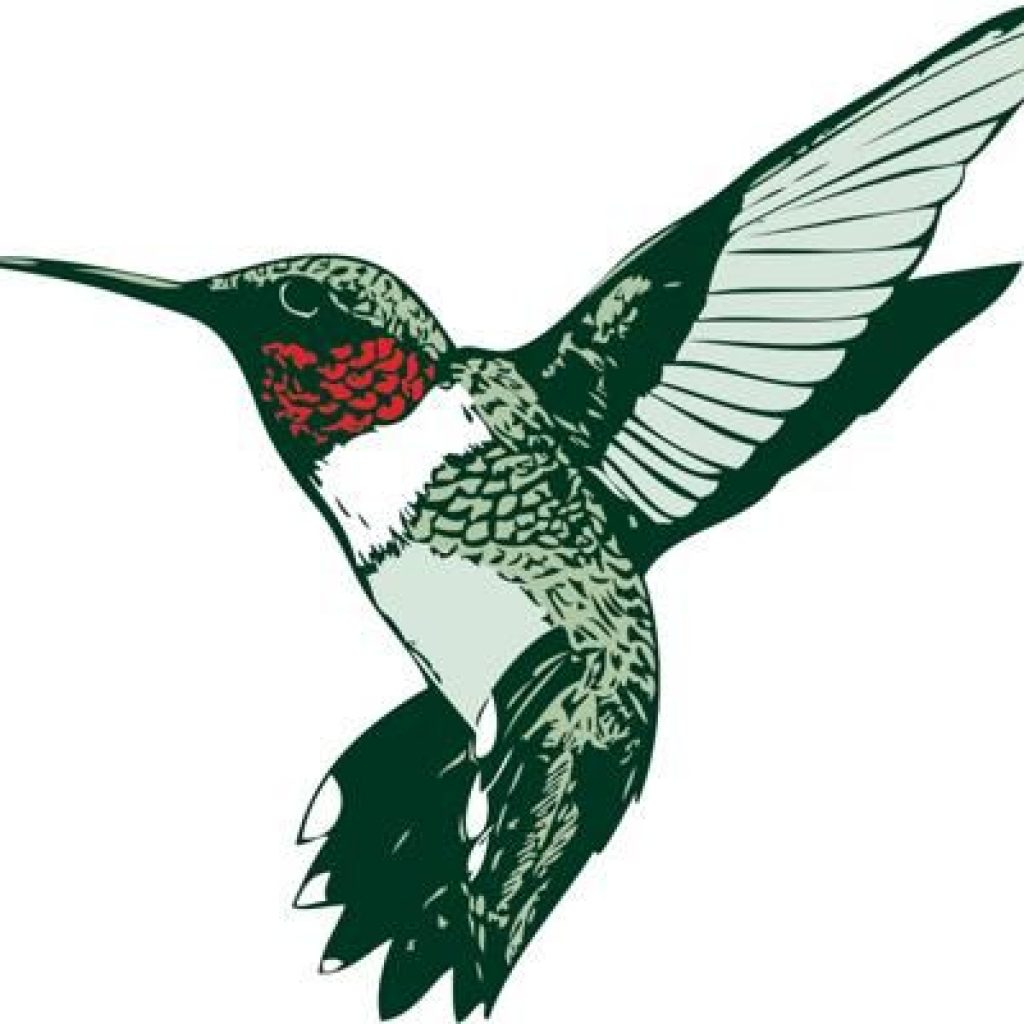 1024x1024 Hummingbird Clip Art Pineapple Clipart