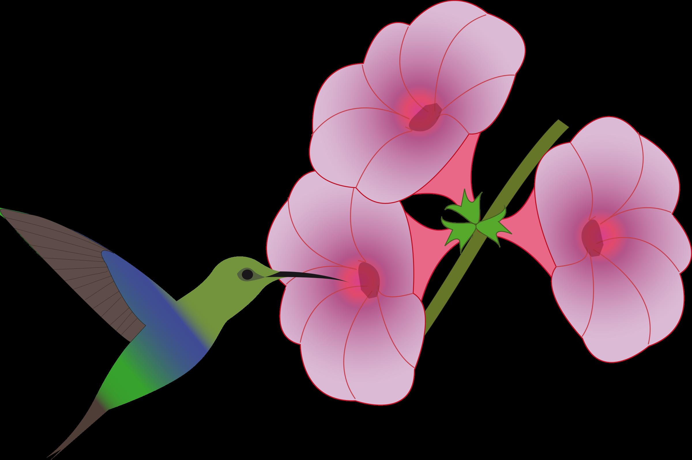 2400x1595 Hummingbird Clip Art. Hummingbird Stencil With Hummingbird Clip
