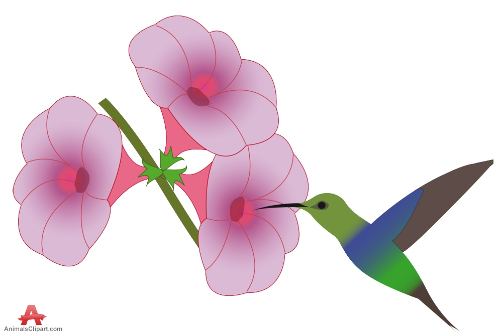 999x666 Hummingbirds And Flowers Clipart