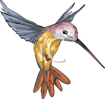 350x330 Cartoon Hummingbird Clip Art Painted Hummingbird