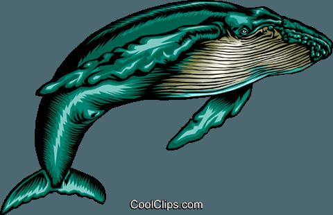 480x310 Humpback Whale Royalty Free Vector Clip Art Illustration Anim0376