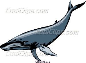 300x221 Humpback Whales Vector Clip Art