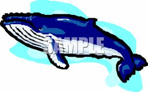300x186 Blue Background Behind A Blue Humpback Whale Clip Art Image