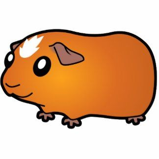 324x324 Amazing Guinea Pig Clipart Tsr