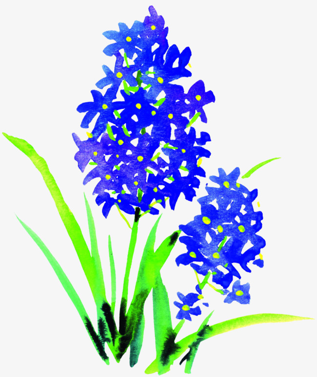 650x772 Hyacinth Blue Picture Material, Hyacinth, Flowers, Bouquet Png