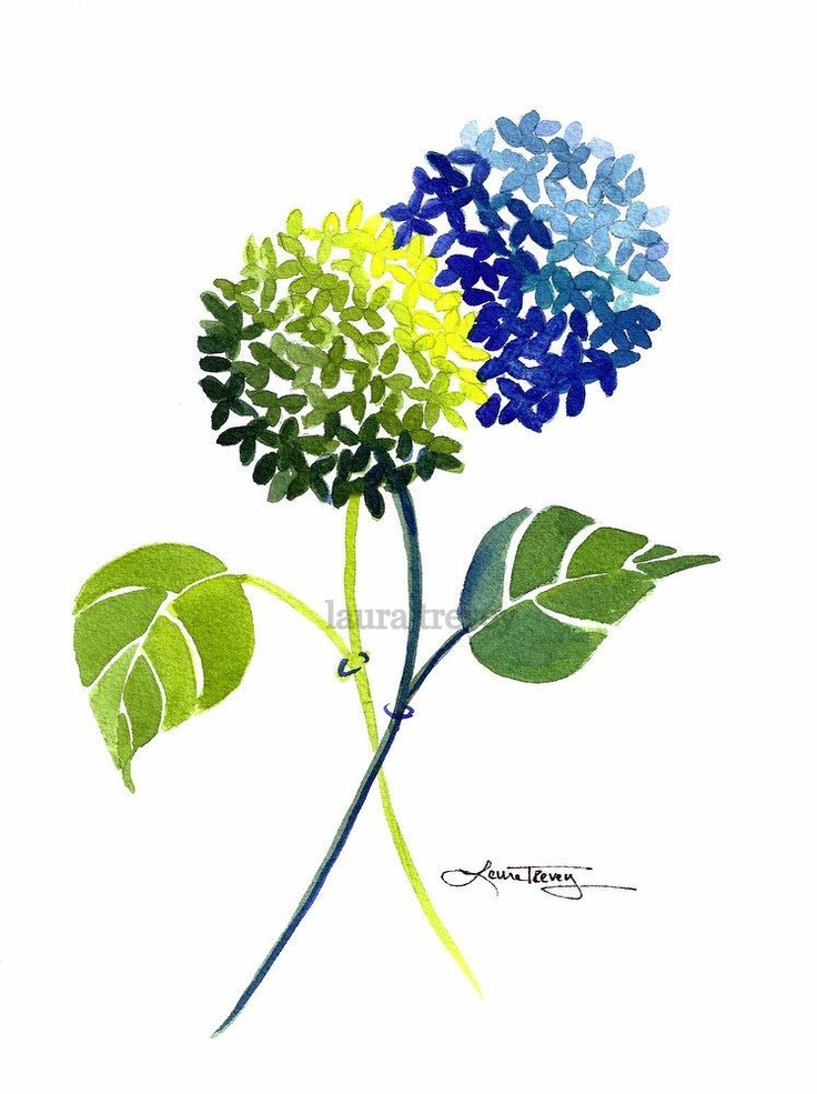 736x985 97 Best Images On Hydrangeas, Etchings