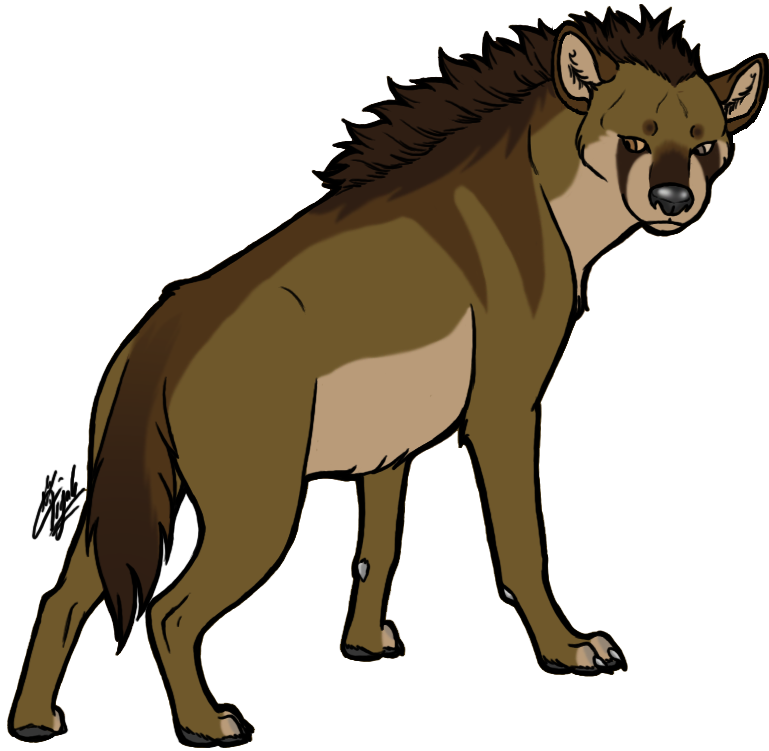 769x751 Staring Hyena, Wild Animal, Png, Transparent Clipart