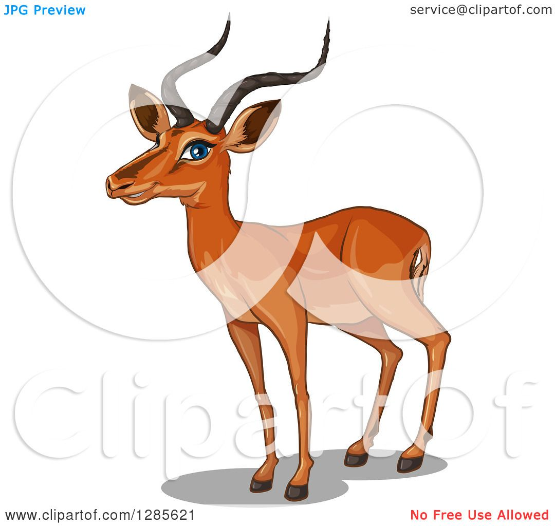 1080x1024 Clipart Of A Standing African Gazelle Deer Facing Left