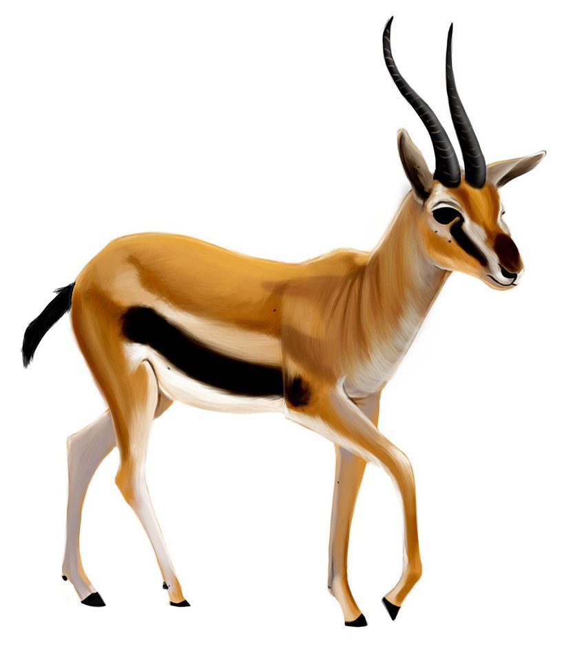 835x957 Gazelle By Designer 27