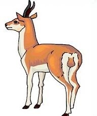 191x228 Top 81 Antelope Clipart