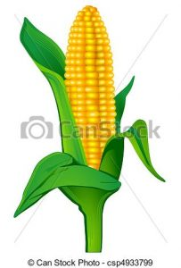 203x300 Indian Corn Clipart Indian Corn Clip Art And Stock Illustrations