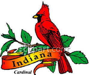 300x251 The State Bird Of Indiana, The Cardinal