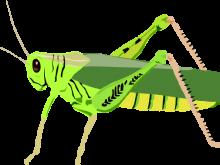 220x165 Cricket Insect Clipart Clip Art Cricket 6 Clipart Panda Free