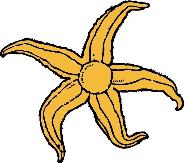 594x527 Starfish Clip Art Free Vector 4vector