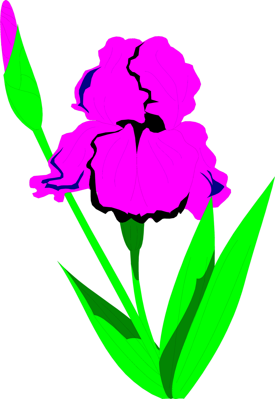 958x1389 Iris Free Stock Photo Illustration Of A Purple Iris Flower