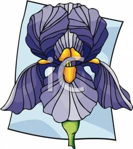 267x300 Graphic Iris Iris Love Iris, Flower Clipart