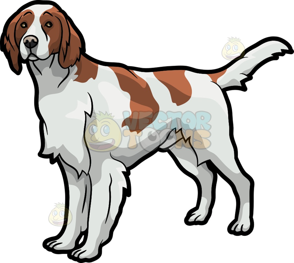 Irish Setter Clipart At Getdrawings Com Free For Personal Use