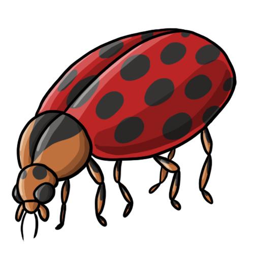 500x500 Free Ladybug Clip Art 19