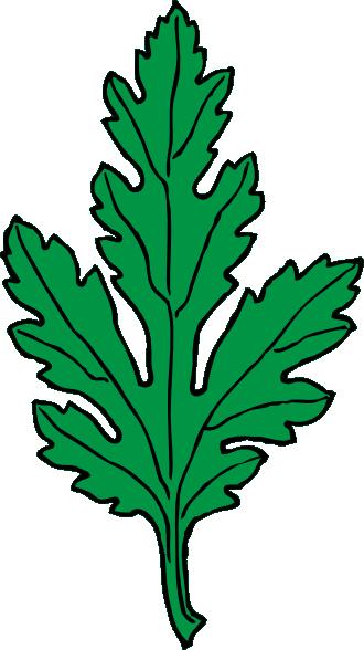 330x588 Ivy Leaf Green Chrysanthemum Clip Art Free Vector 4vector