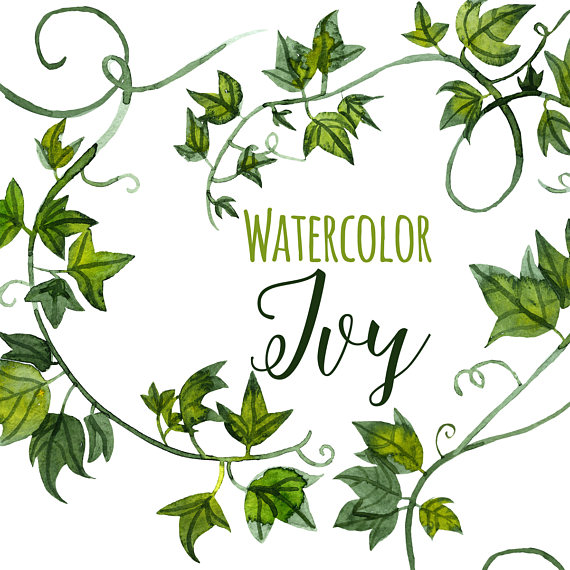 570x570 Watercolor Green Ivy Clipart, Ivy Tendrils Illustration, Fancy